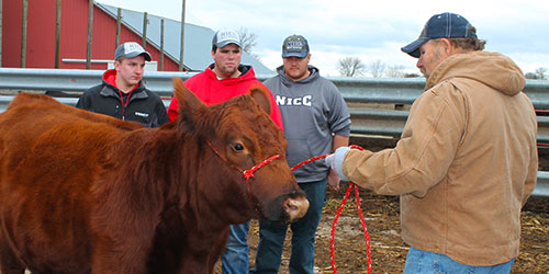 Three male beef science students listen to an instructor with a beef cow.